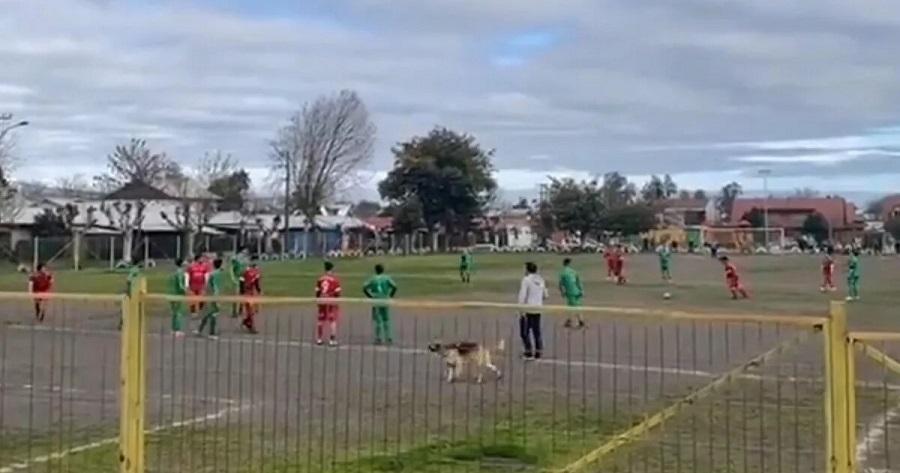 На футбольном матче в Колумбии гол забила собака