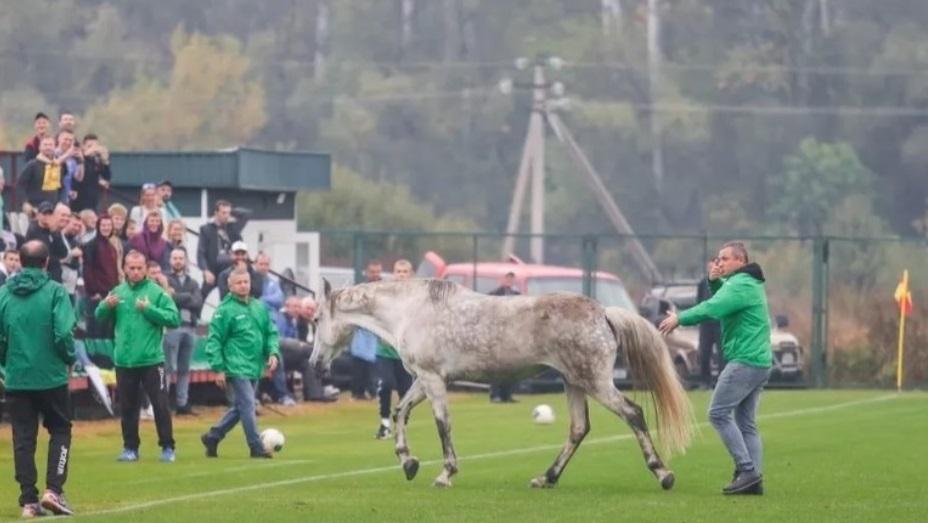 Футбольный матч сборных Украины и Италии в рамках квалификации на Дефлимпийские игры-2021 чуть не сорвали животные
